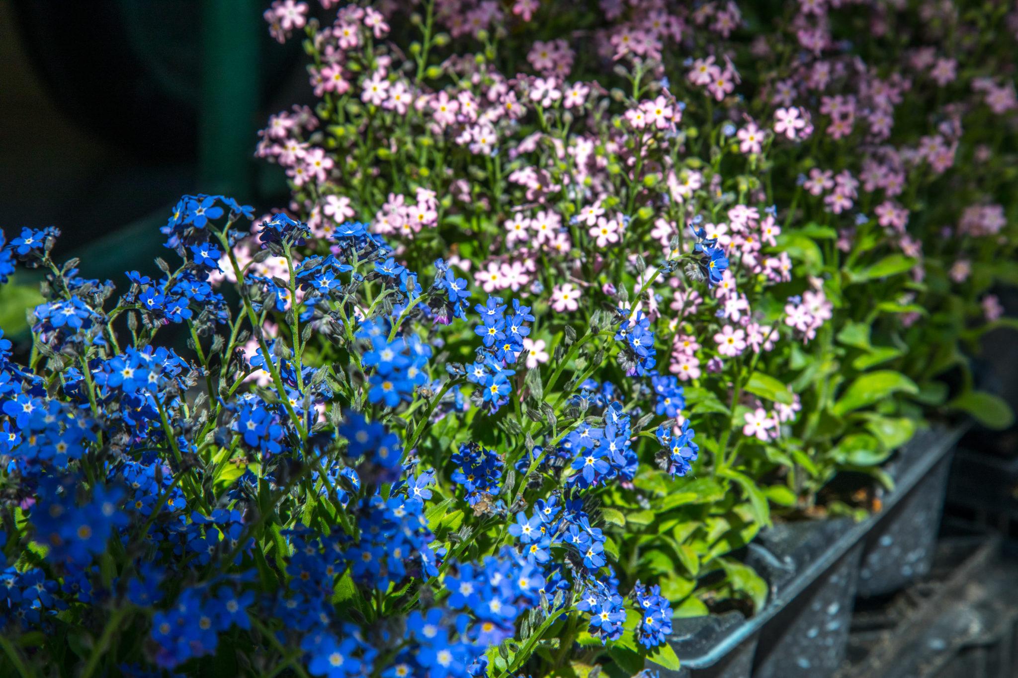 bac à fleurs